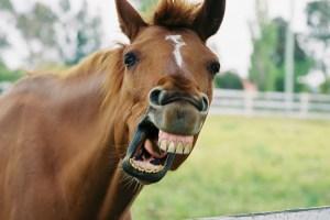 Horsepower Meaning